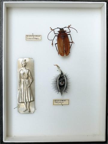 26 x 19.5 x 5 cm / boite verre et bois: contenu insecte + métal + coque et faux cils)